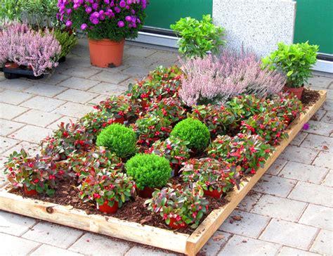 erika winterhart kaufen pflanzzensset einzelgrab schatten pflanzen versand harro