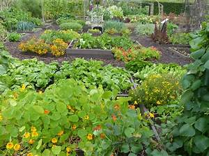 Companion Vegetable Garden Layout