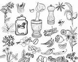 Spices Herbs Clipart Kitchen Doodle Coloring Herb Pages Lemon Jar Etsy Il Parsley sketch template