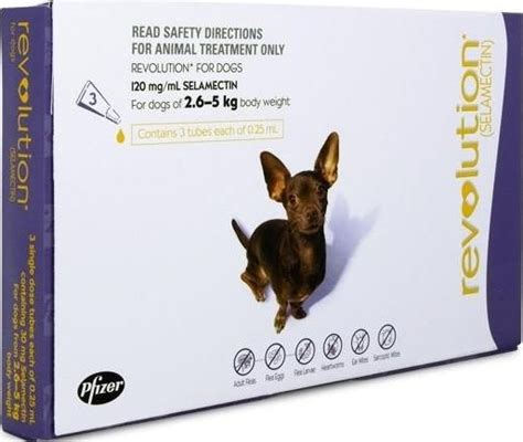 revolution small dog purple  kg pet store   door