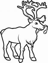 Reindeer Coloring Printable Carrot sketch template