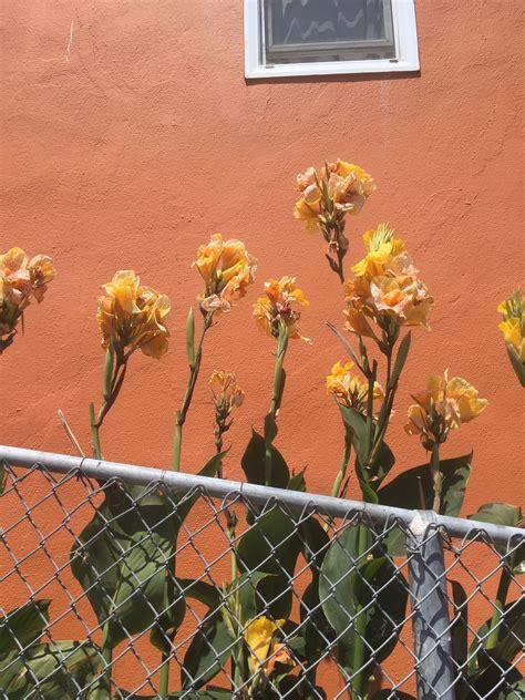 Pinterest// itslauraax☼     Picture collage wall, Orange ...