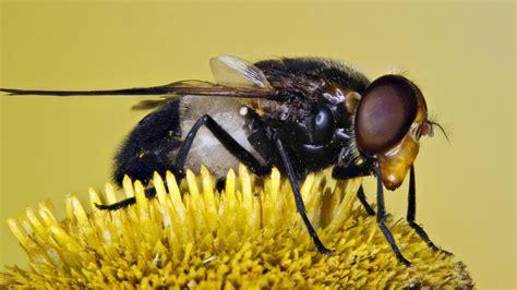 welche pflanzen mö bienen nicht nicht nur bienen sorgen f 252 r best 228 ubung pflanzen welt