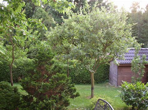 Teegeschäft Garten Buchholz In Der Nordheide by Ferienwohnung Buchholz Nordheide Bei Hamburg