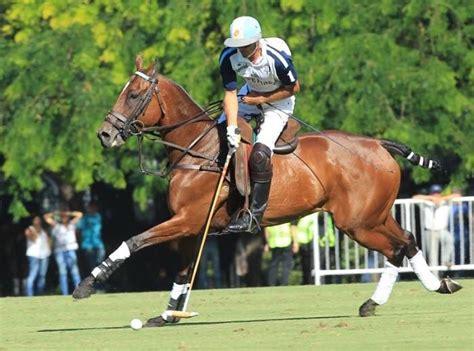 polo cambiaso adolfo horse kings pony sport breeds