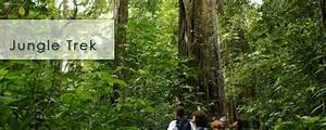 Jungle Trekking • Gusti Bali Tours