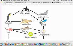 The Diagram Shows An Ocean Food Web  Which Organism Is A