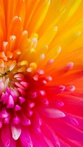 Colorful Tropical Flowers iPhone 6 Plus Wallpaper 21681 ...