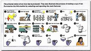 The Pictures Below Show How Tea Is Produced They Also