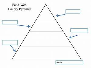 Story Ore Blog  Food Web Diagram Template