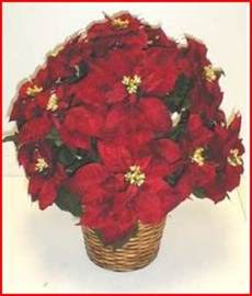 are poinsettias poisonous to cats are poinsettias toxic to dogs and cats