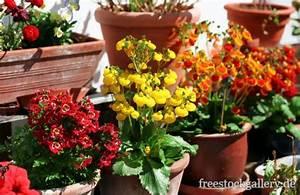 Künstliche Blumen Für Draußen : blumen mit topf dekoration bild idee ~ Michelbontemps.com Haus und Dekorationen