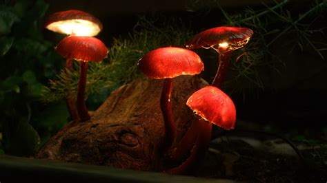 enchanted forest lights