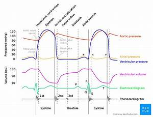 Cardiac Cycle Phases  Definition  Systole And Diastole