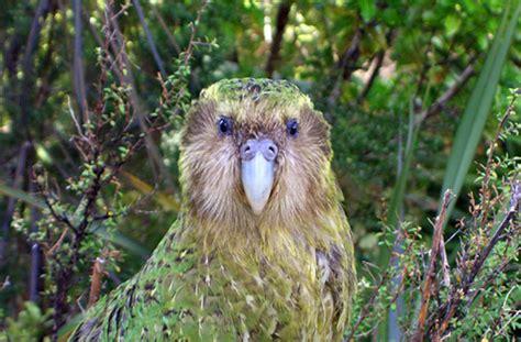 la cuisine de a z le kakapo perroquet incroyable et con madmoizelle com