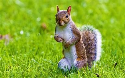 Desktop Wild Animal Wallpapers Squirrel Wallpapersafari Code