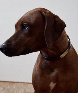 Hundehalsband Mit Namen Leder : hundehalsband mit namen aus hochwertigem leder von made for dogs ~ Yasmunasinghe.com Haus und Dekorationen
