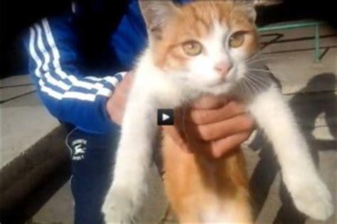 chat et rencontre au prison