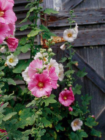 flowers flower beds garden ponds ideas images  pinterest
