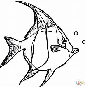 Angelfish 3 coloring page | Free Printable Coloring Pages