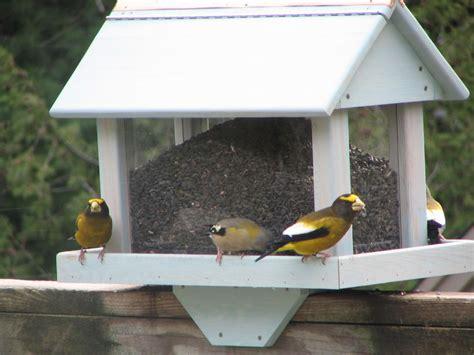 Backyard Bird Feeders Decorative Backyard Wild Bird