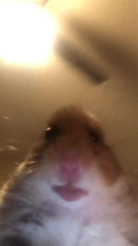 True Love In 2020 Hamster Hamster Wallpaper Animals