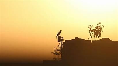 Outline Twilight Bird Raven Sunset Shadows 1080p