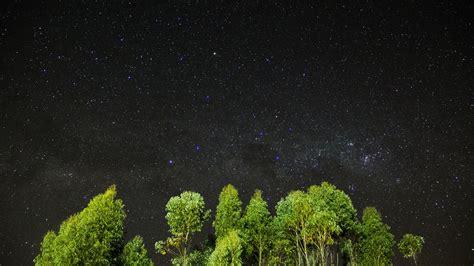 Wallpaper night, stars, sky, trees, 4k, Nature #16014