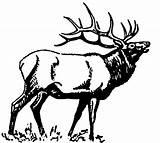Elk Coloring Bugle Bugling Moose Carving Embroidery sketch template