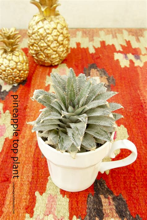 grow  beautiful pineapple houseplant   pineapple top creative jewish mom