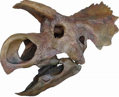 Dinosaur Skull Skeleton Printing Unidentified Ava 3dprint