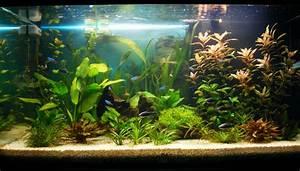 Galeria de fotos e imagens: Tipos de aquários