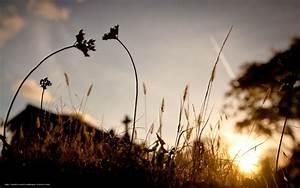 Download wallpaper nature, grass, Plants, evening free ...