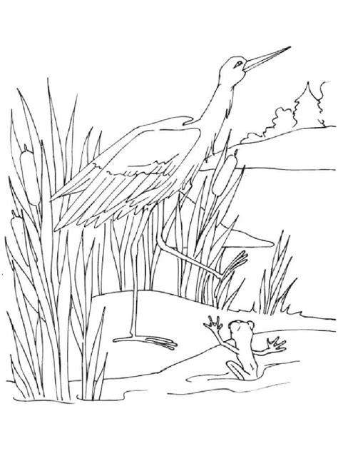 swamp coloring pages   print swamp coloring pages