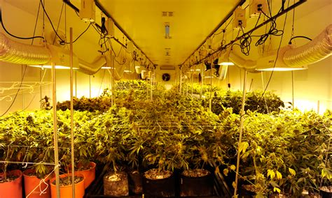 grow room lights cannabist q a grow license edibles purchase limit