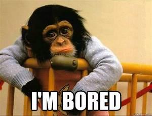 Bored Monkey memes   quickmeme