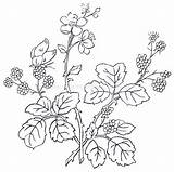 Coloring Pages Advanced Adult Flower Printable Books Ru Crazy Embroidery Floral Patterns sketch template