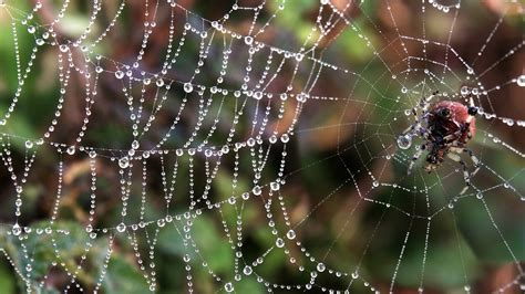 fantastic hd spider wallpapers