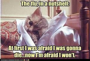 Hell hath no fu... Stupid Flu Quotes