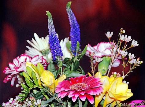 blumenbilder von rosen bilder blumen wie tulpen ein