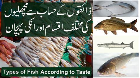 fishtypes  fishes    taste trout