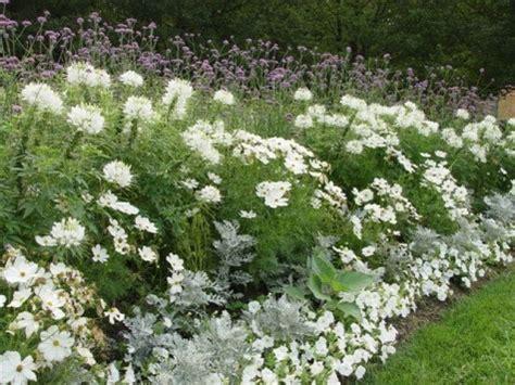 white garden flowers cranbrook academy dirt simple