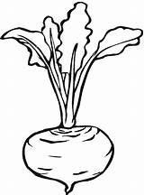 Beetroot sketch template
