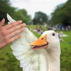 Aflac Duck Commercials