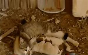 VIDEO: Cat gives birth to puppies… really? – ARYNEWS