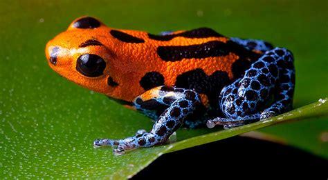 How to glimpse the five rarest Amazon rainforest animals ...
