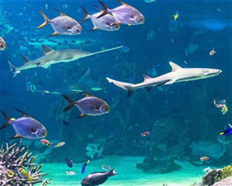 aquarium sea occasion 28 images all about aquarium fish using seawater for saltwater tank