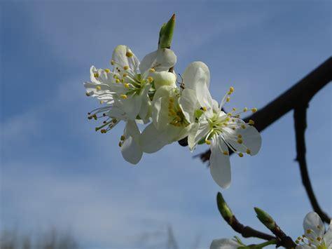 Free Images : nature branch flower bloom food spring