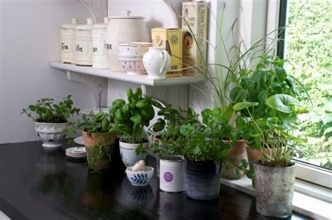 plante de bureau feng shui top 10 plante feng shui de interior casa și grădina