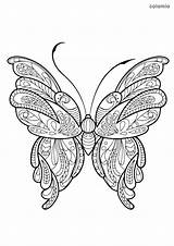 Butterfly Coloring Animals sketch template